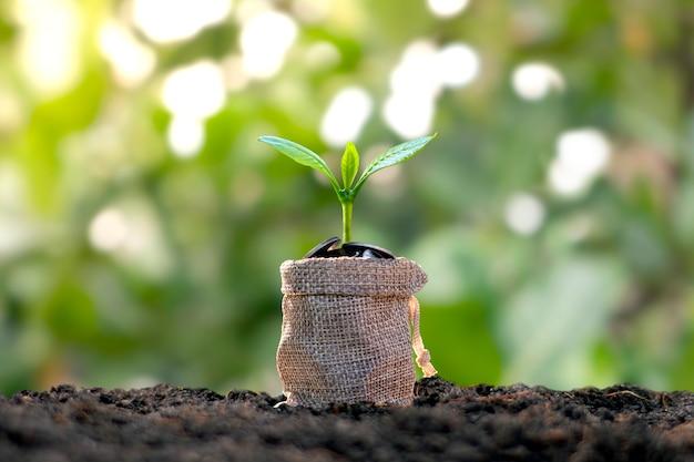 Árvore que cresce a partir de sacos de economia de dinheiro e pano de fundo da natureza verde turva o conceito de crescimento de dinheiro.