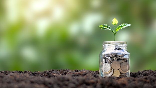Árvore que cresce de frasco para economizar dinheiro e pano de fundo da natureza verde, conceito de crescimento de dinheiro.