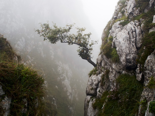Árvore que cresce de uma rocha em uma paisagem montanhosa de nevoeiro (astúrias, espanha). feche a foto