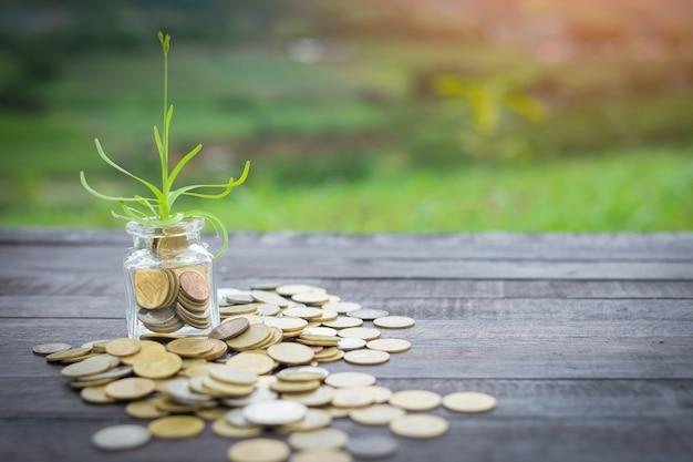 Árvore que cresce em moedas na tabela de madeira no fundo da natureza.