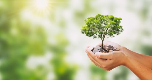 Árvore que cresce na pilha de dinheiro na mão e fundo verde da natureza