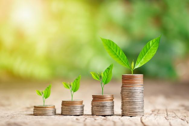 Árvore que cresce na pilha de moedas com raio de sol para salvar o conceito de dinheiro