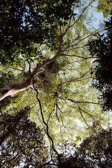 Árvore ramo natureza flora sol