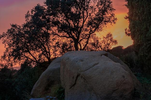 Árvore retroiluminada com rocha no pôr do sol. conceito de luz
