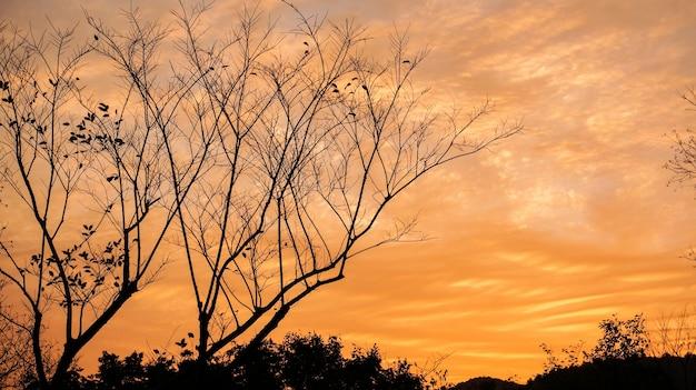 Árvore seca com laranja fundo das nuvens