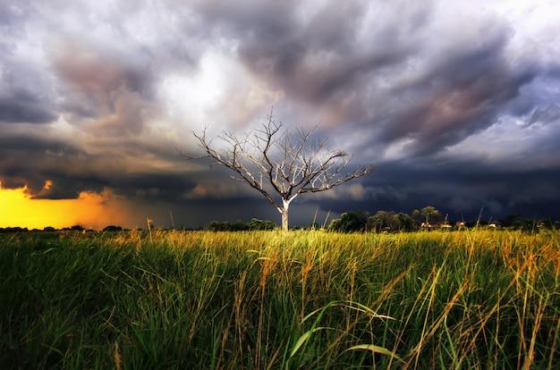Árvore seca com tempestade