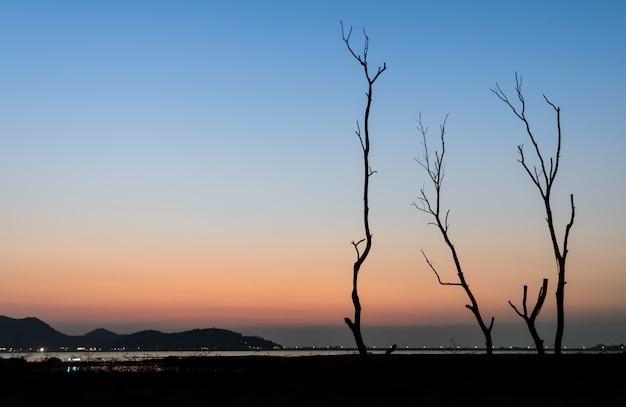 Árvore seca de silhueta e lago na vista crepuscular