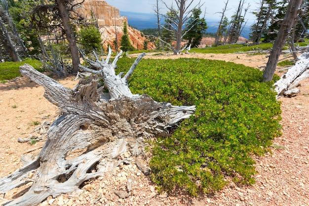Árvore seca em decomposição contra montanhas rochosas.