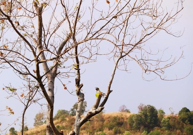Árvore seca em tropical