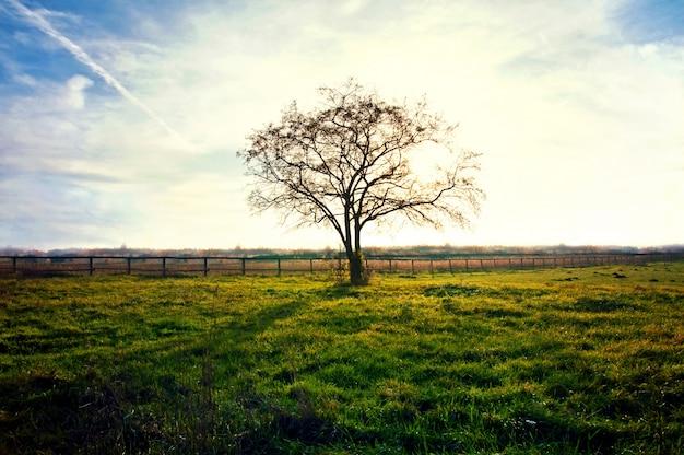 Árvore seca em um por do sol
