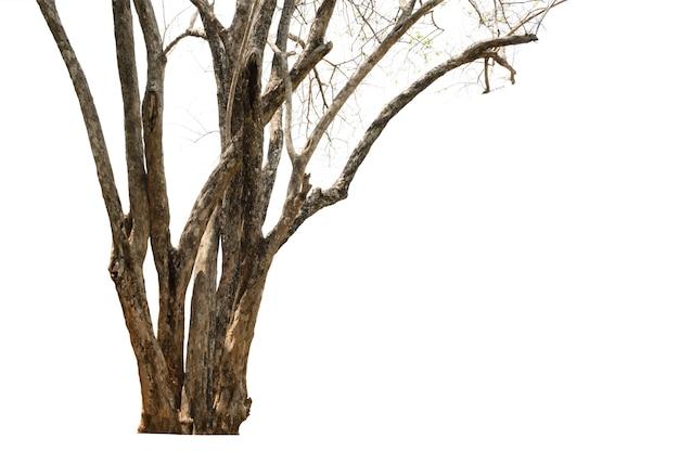 Árvore seca isolada
