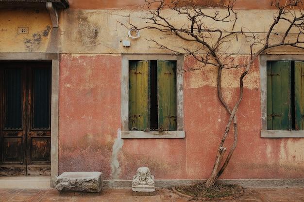 Árvore seca na fachada de um edifício