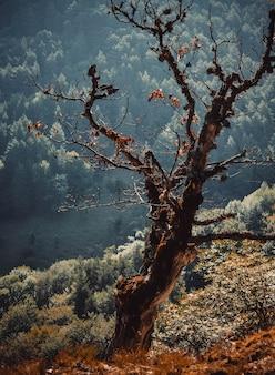 Árvore seca na floresta e com prospecto e filtro