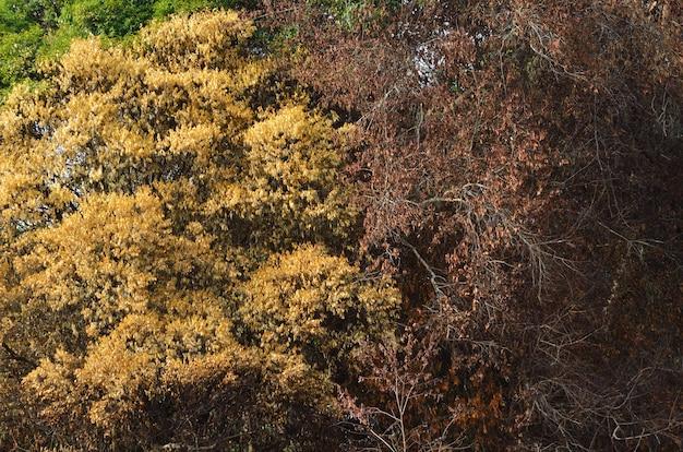 Árvore seca na floresta tropical, ásia no verão