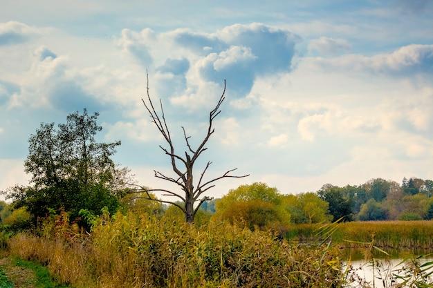 Árvore seca na margem do rio entre matagais densos, céu pitoresco sobre o rio
