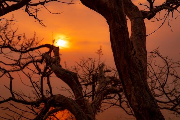 Árvore sem folhas da silhueta bonita e céu do por do sol. cena romântica e pacífica do sol e céu dourado na hora por do sol com ramos de beleza. beleza na natureza. papel de parede vista do sol.