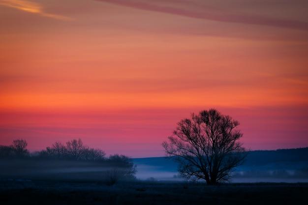 Árvore sem folhas fundo de nuvens ao amanhecer
