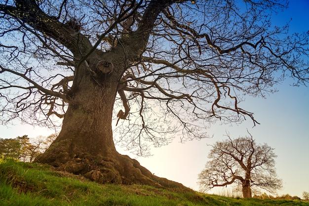 Árvore sem folhas