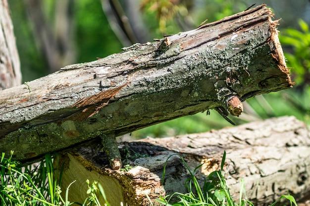 Árvore serrada na floresta