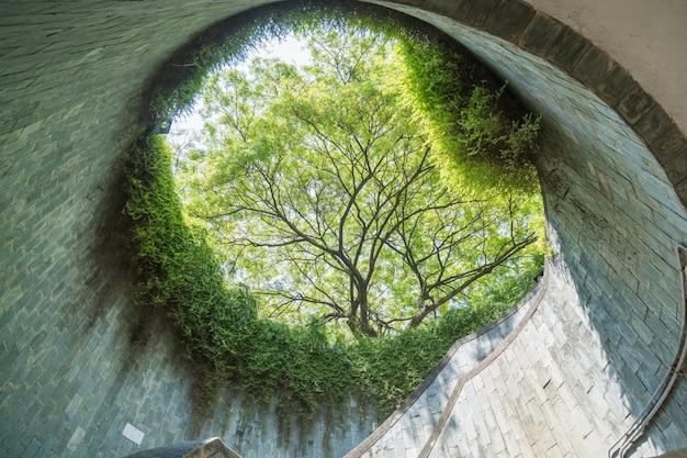 Árvore sobre túnel subterrâneo é uma passarela de tijolos no parque