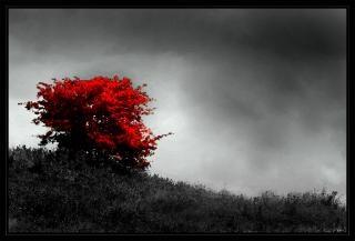 Árvore solitária, a arte