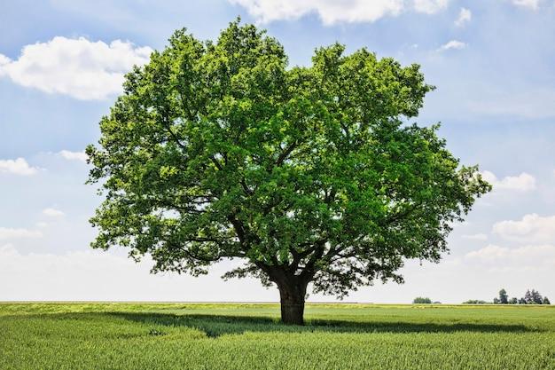 Árvore solitária crescendo em um campo