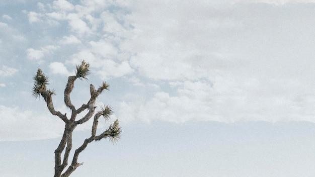 Árvore solitária de joshua no deserto da califórnia