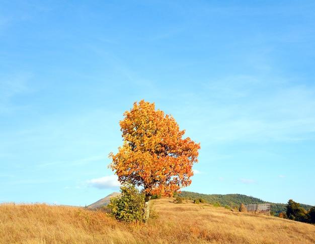 Árvore solitária de outono na encosta da montanha dos cárpatos (e o céu noturno com algumas nuvens).