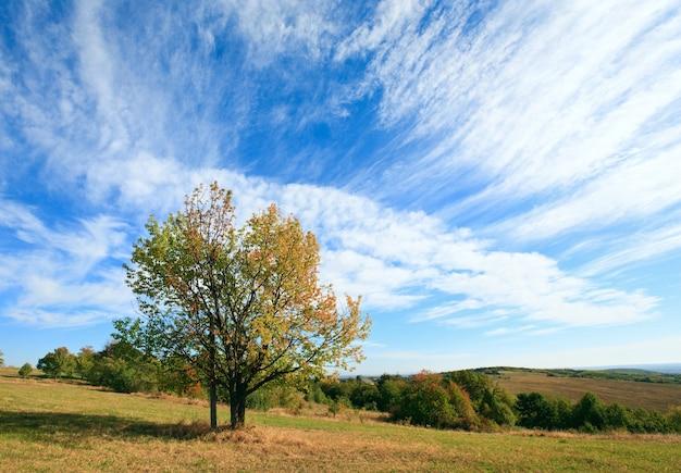 Árvore solitária de outono no céu com algum fundo de nuvens cirros (e cruze sob a coroa da árvore).