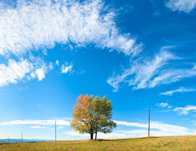Árvore solitária de outono no céu com algum fundo de nuvens cirros. três tiros costuram a imagem.