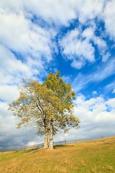 Árvore solitária de outono no céu com algum fundo de nuvens cirros.