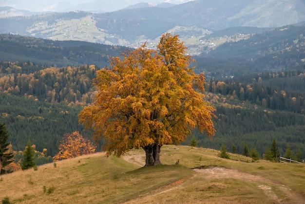 Árvore solitária de outono perto da estrada da montanha