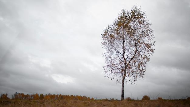 Árvore solitária de outono