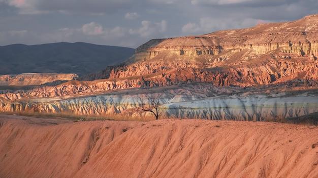 Árvore solitária e paisagem fantástica de cânion e rochas no vale vermelho da capadócia, na turquia