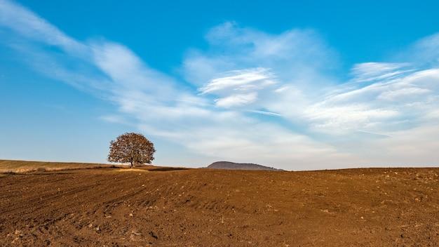 Árvore solitária em terra arável