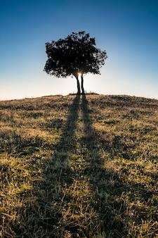 Árvore solitária em uma colina ao pôr do sol