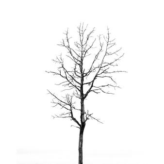 Árvore solitária isolada no branco