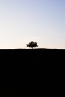 Árvore solitária misteriosa no horizonte. silhueta de contraste. o topo é claro, o fundo é escuro. conceito minimalista do bem e do mal.