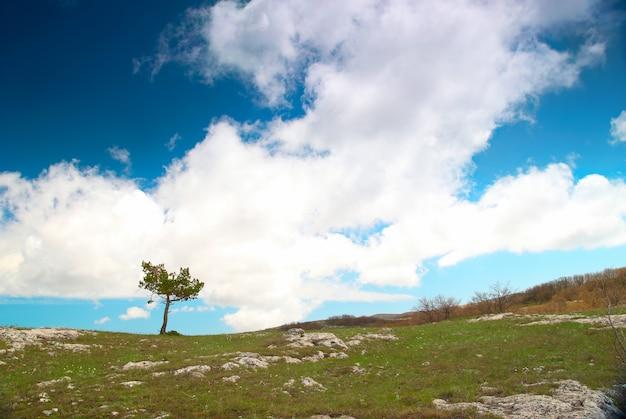Árvore solitária no campo com céu azul