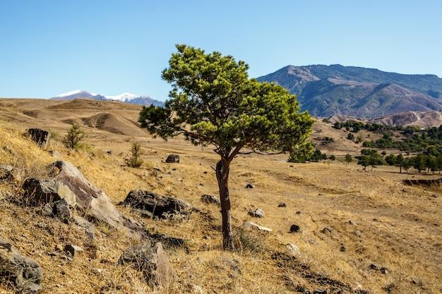 Árvore solitária no campo