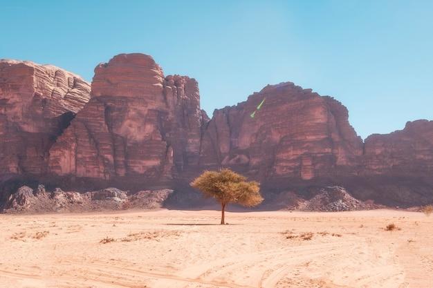 Árvore solitária no deserto de wadi rum, na jordânia, contra o fundo de rochas arenosas, em um dia quente
