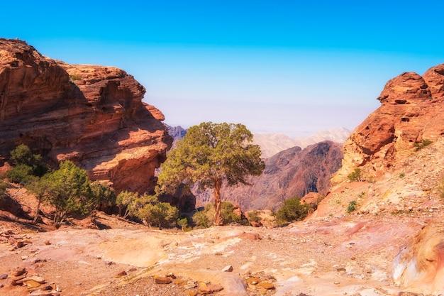 Árvore solitária no deserto nas montanhas perto da famosa petra na jordânia