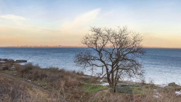 Árvore solitária no inverno
