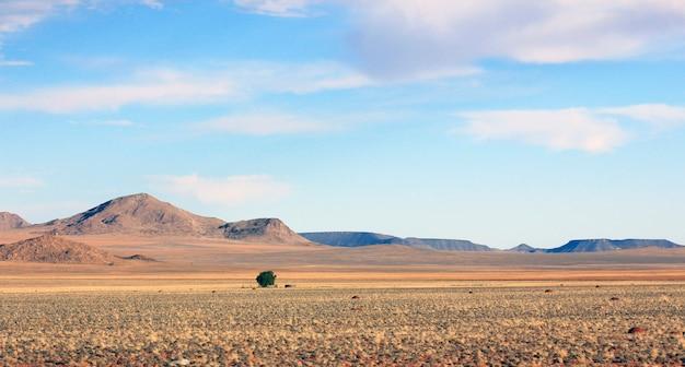 Árvore solitária no meio do nada