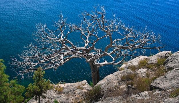 Árvore solitária no penhasco