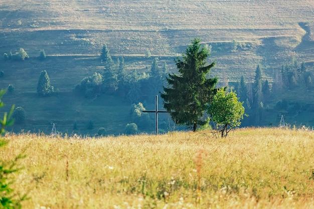 Árvore solitária no planalto