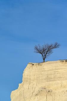 Árvore solitária no topo de um penhasco de calcário contra o céu azul ao pôr do sol