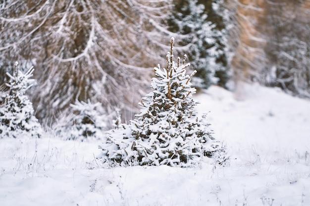 Árvore solitária perto de montanhas de belluno