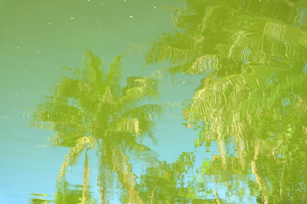 Árvore sombra na água