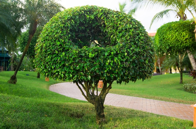 Árvore sozinha no jardim verde